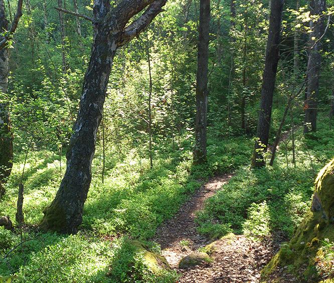 Skogen bakom vår fabrik i Bovallstrand