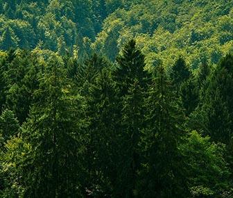 Skog för hållbara dörrar i Bovallstrand